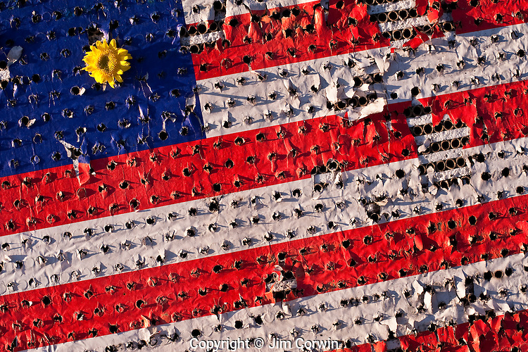Fourth of July  with American flag damaged by fireworks with yellow flowers