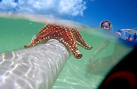 Grand Cayman. Boat excursion. Starfish at Starfish Point.