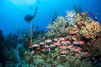 Salt River Canyon east<br /> North Shore of St. Croix <br /> U.S. Virgin Islands.<br /> Model Kim Capelli MR
