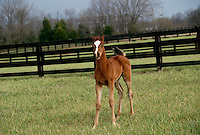 Foal making very silly face and ears back tail up