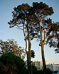 Trees in San Francisco, California, CA, USA