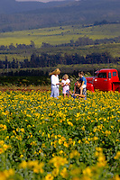 Family in Field of Yellow Flowers