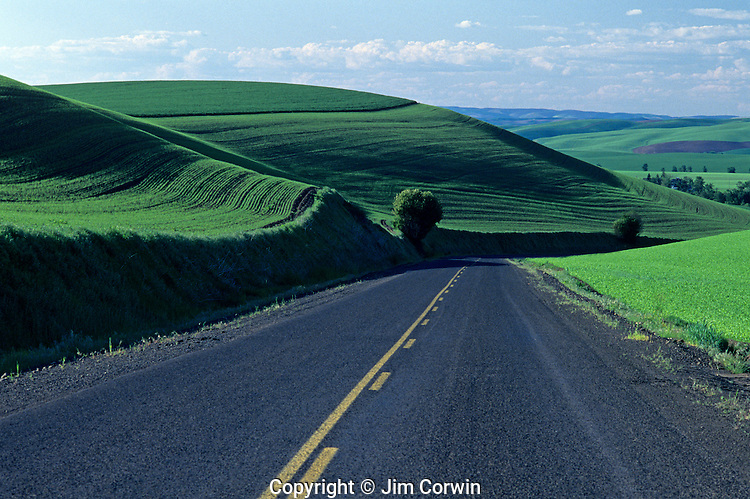 Paved curvy road stretching into the horizon in Eastern Washington winding its way through green fields Washington State USA