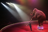 Elephant act at the circus Boouglione, Paris - Photograph by  Owen Franken.