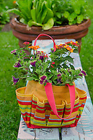 Colorful canvas bag with flowers growing, Community garden, Maine, USA