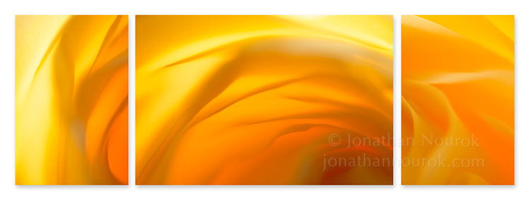 Close-up photographic triptych of yellow orange rose flowers.