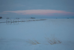 Idaho, South Central, Twin Falls, Filer. Pre-dawn light over a irrigation lines and farm scene in winter.