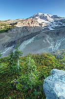 Mount Rainier and subalpine heather meadow, Paradise, Mount Rainier National Park, Washington