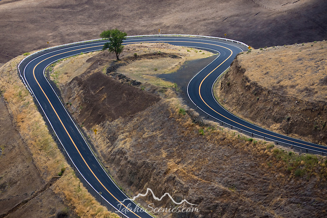 A lone tree stands in the middle of a hairpin curve on the  Lewiston Hill. Built in 1917 the highway was an engineering feat for its time.