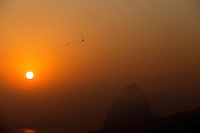Flock of birds flies over the entrance of Guanabara Bay at sunset, Sugar loaf mountain in background, Rio de Janeiro, Brazil.