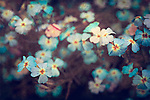 Spring flower bed.<br />