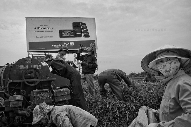Rice farmers harvest their fields next to the highway from Da Nang to Hoi An.  Their combined salery would not be enough to purchase an Apple iPhone.