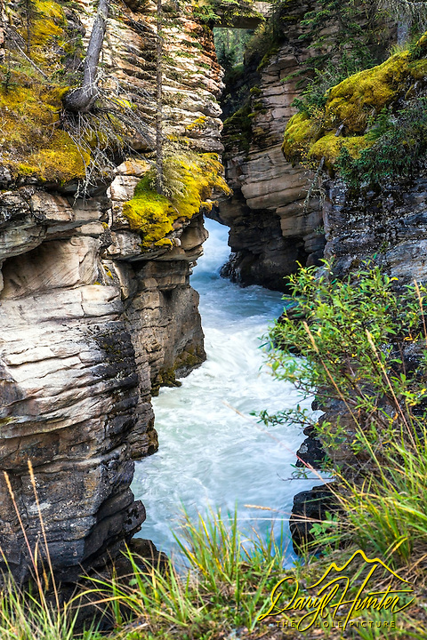 A slot canyon carved by the mighty Athabaska River in Jasper National Park