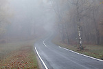 Misty winter countryside with road and trees