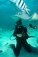 MARINE LIFE: DIVERS<br /> Naturalist Diver Studying Southern Stingray<br /> Dasyatis americana with photographer