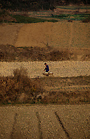 Asie/Chine/Jiangsu/Env Nankin&nbsp;: La campagne - Paysan rentrant du march&eacute; avec sa palanche sur le dos<br /> PHOTO D'ARCHIVES // ARCHIVAL IMAGES<br /> CHINE 1990