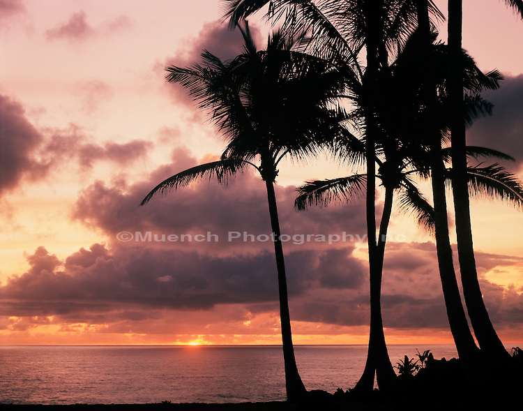 Coco Palms, Maui Waianapanapa State Park, HAWAII