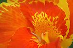 Floral design macro, Costa Rica rain forest