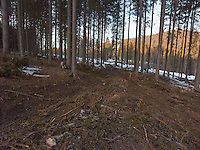 FOREST_LOCATION_90037