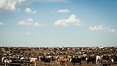 """South West Kansas, USA, August 2011:.View of giant feedyard.  Millions of cows are gaining weight in such feedyards across the region, where four huge meatpacking plants of National Beef, Cargill and Tyson slaughter and process about 20 thousand cattle a day. Kansas dominates American beef industry, by producing one quarter of all beef in the USA..(Photo by Piotr Malecki / Napo Images)..Pd-Zach Kansas, Stany Zjednoczone, Sierpien 2011:.Bydlo w jednej z tuczarni zwanych """"feedyards"""". W tym rejonie jest mnostwo takich tuczarni, by zaopatrywac cztery wielkie zaklady miesne nalezace do firm National Beef, Cargill i Tyson. Zaklady te przerabiaja razem okolo 20 tysiace sztuk bydla dziennie.  Stan Kansas zdominowal rynek wolowiny w Stanach Zjednoczonych, produkujac jedna czwarta calej amerykanskiej wolowiny. Amerykanski przemysl miesny jest bardzo uzalezniony od taniej sily roboczej, ktora daja emigranci..Fot: Piotr Malecki / Napo Images."""
