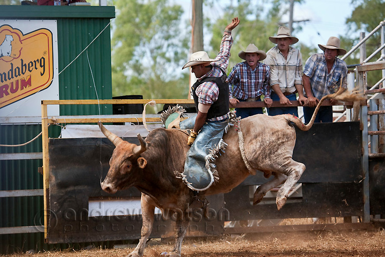 Bull rider in action at Chillagoe Rodeo.  Chillagoe, Queensland, Australia