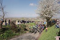 peloton over the Oude Kwaremont<br /> <br /> 101th Ronde Van Vlaanderen 2017 (1.UWT)<br /> 1day race: Antwerp &rsaquo; Oudenaarde - BEL (260km)