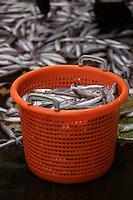 Basket of blue whiting Micromesistius poutassou or Gadus poutassou on trawler deck