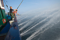 """Europe/France/Aquitaine/64/Pyrénées-Atlantiques/Pays Basque/Saint-Jean-de-Luz:  le Thonier Canneur ou Thonier Bolincheur """"Aïrosa""""  à la pêche au thon à la  canne,les rampes à eau  sont mises en action pour camoufler le bateau.La pêche se  de la sardine"""