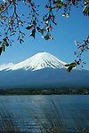Fuji and Sakura or Cherry Blossoms at Lake Kawaguchi - Cycling, hiking, camping, fishing and just sightseeing are the main entertainments around Mt Fuji along the shores of the lakes that surround the sacred mountain.<br /> Mount Fuji is the highest mountain in Japan at 3,776 meters in altitude, an active volcano that last erupted in 1707; Fuji straddles Shizuoka and Yamanashi prefectures just west of Tokyo, from where it can be seen on a clear day. Mount Fuji's symmetrical cone is a well known symbol of Japan and is frequently visible in art and photographs.  Although Mount Fuji has not erupted in over 300 years its still not considered to be extinct.