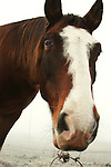 Close-up of Horse in fog