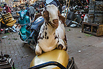 A goat atop a scooter, Mumbai, India