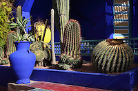 Cacti, Majorelle Garden, Marrakech, Morocco. These botanical gardens were designed by French painter Jacques Majorelle, 1886-1962, in the 1920s and 1930s. He invented the shade of cobalt blue, known as Majorelle blue, which is used on the buildings and walls. Picture by Manuel Cohen