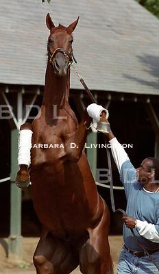 Funny Cide at Saratoga, 2003.