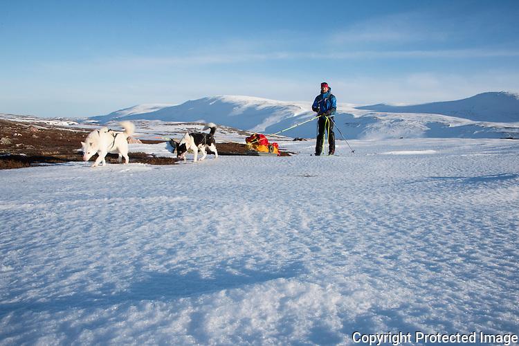 Skiløper med pulk og trekkhunder på Varangerhalvøya. ---- Skier with dogs and sled on Varangerhalvøya.