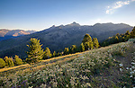Idaho, North Central, Riggins, Nez Perce National Forest. Evening sun streams over the Seven Devils Range and wildfloers abound on the hillsides.