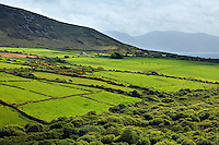 Stone lined green fields at base of Emlagh Mountain, Lougher, Slieve Mish Mountains, Sliabh Mis, Dingle Peninsula, County Kerry, Republic of Ireland