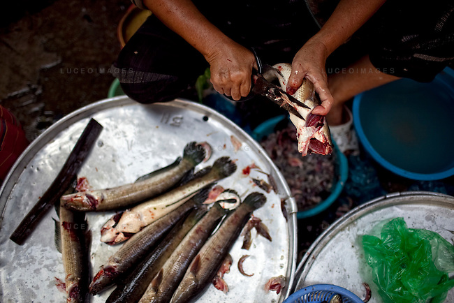 """A woman cuts up fish at a market in Long Xuyen, the capital of An Giang Province, Vietnam. When the Mekong River reaches Vietnam it splits into two smaller riveres. The """"Tien Giang"""", which means """"upper river"""" and the """"Hau Giang"""", which means """"lower river"""". Photo taken on Monday, December 8, 2009. Kevin German / Luceo Images"""