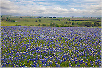 From Shiner, Texas, east of San Antonio, this field of bluebonnets was nice foreground for the rolling hills of green this spring.