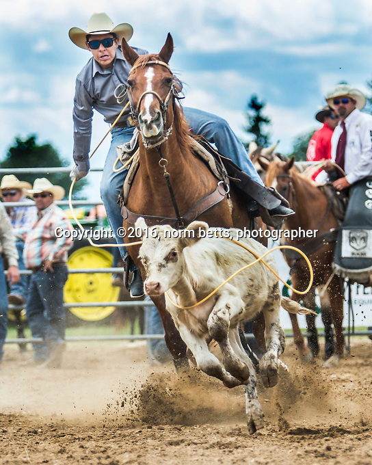 The RAM Rodeo in Forest, Ontario, Canada , 20&amp;21 Aug'16<br /> photos by Norm Betts<br /> normbetts@canadianphotographer.com<br /> &copy;2016, Norm Betts, photographer<br /> 416 460 8743