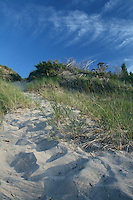 Sand Pathway up a Dune, Pinery Provincial Park, Ontario, Canada
