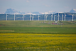 Wind turbines and Rocky Mountains in Pincher Creek, Alberta, Canada