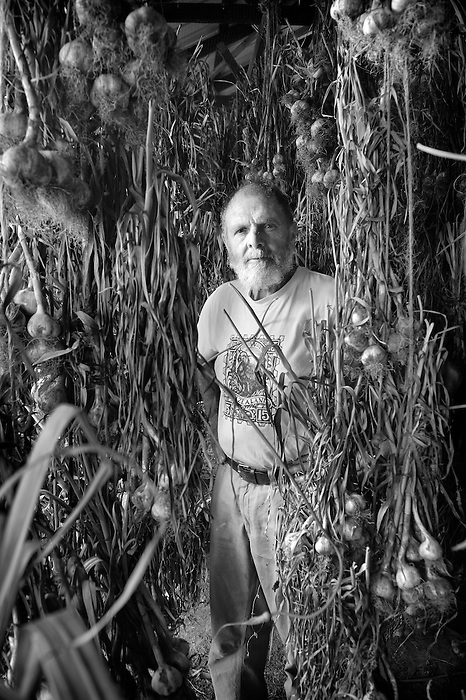 Keith Stewart amongst organic garlic hanging and drying in a barn