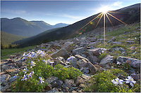 I awoke before 4:00am to make the drive and hike up to Butler Gulch for sunrise. This Colorado wildflower picture was captured just as the sun hit the ridge of the mountain. The columbine were beautiful and the morning was nearly perfect. At Butler Gulch, wildflowers of all colors bloom in the summer months, and the trek up to this point is well worth the effort.