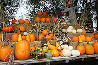 Pumpkin stand at a farm in Ladner, British Columbia, Canada
