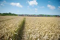 peloton plowing through the cornfields of Northren France<br /> <br /> 2014 Tour de France<br /> stage 4: Le Touquet-Paris-Plage/Lille M&eacute;tropole (163km)