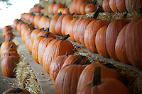Pumpkins for Sale
