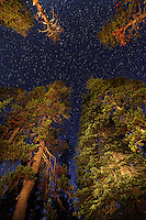 Stars above forest, Crater Lake National Park, Oregon, USA, North America