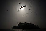 Seagulls hover over a ferry boat as it pulls away from one of the Dokdo Islands, known to Japanese as Takeshima, sovereignty over which is disputed between Japan and South Korea, in the Sea of Japan on 22 June 2010..Photographer: Robert Gilhooly