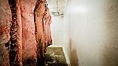 South West Kansas, USA, August 2011:.Small family owned meatpacking firm like this one slaughters about 10 cows on a typical day. There's only few left in this region where each of four giant meatpacking plants kills and processes 5 thousand cattle a day. Kansas dominates American beef industry, by producing one quarter of all beef in the USA..(Photo by Piotr Malecki / Napo Images)..Mead, Kansas, Stany Zjednoczone, Sierpien 2011:.Mala rodzinna masarnia zabija i przerabia okolo 10 krow podczas typowego dnia pracy. W tym rejonie pozostalo ich juz tylko pare, ze wzgledu na sasiedztwo czterech gigantycznych zakladow miesnych, z ktorych kazdy zabija i przerabia okolo 5 tysiecy sztuk bydla dziennie.  Stan Kansas zdominowal rynek wolowiny w Stanach Zjednoczonych, produkujac jedna czwarta calej amerykanskiej wolowiny. Amerykanski przemysl miesny jest bardzo uzalezniony od taniej sily roboczej, ktora daja emigranci...Fot: Piotr Malecki / Napo Images.