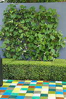 Grape vines in fruitscaping backyard, integrated into yard landscape, with colorful patio Vitis
